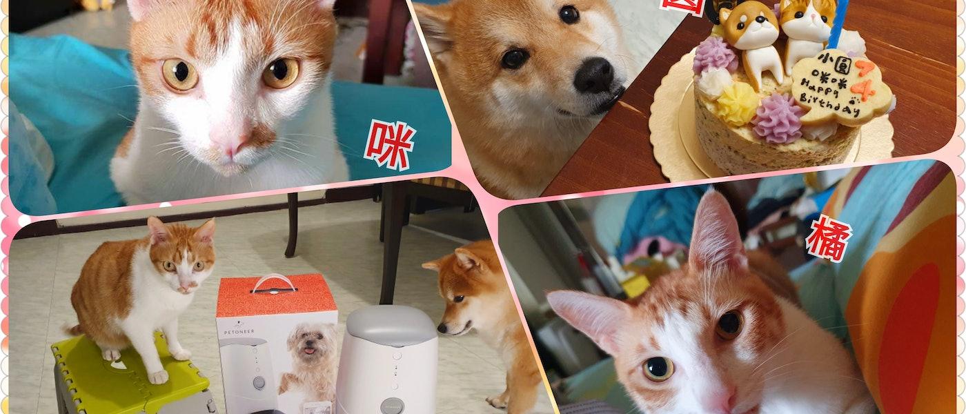 寵物部落客推薦7款貓狗皆適用的寵物好物