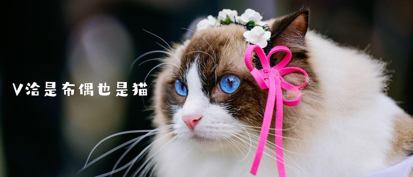 資深貓奴推薦8款貓咪居家及外出用品