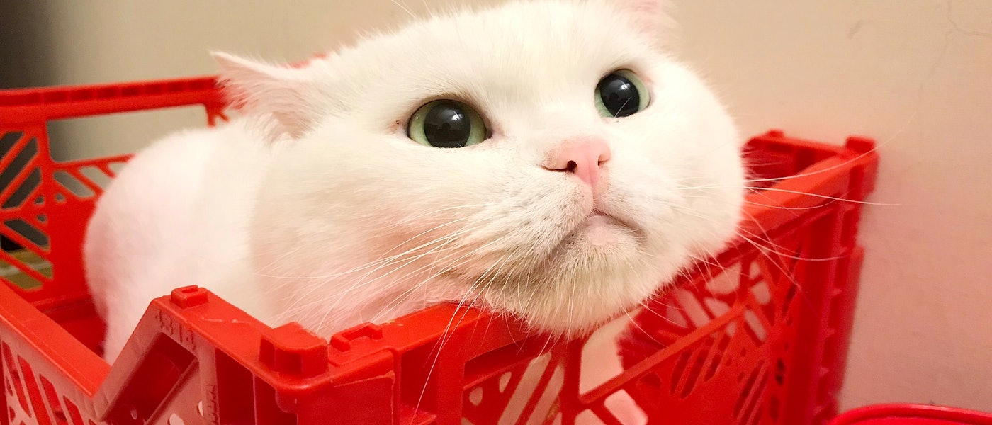 知名寵物部落客推薦8款飼養成貓必備好物
