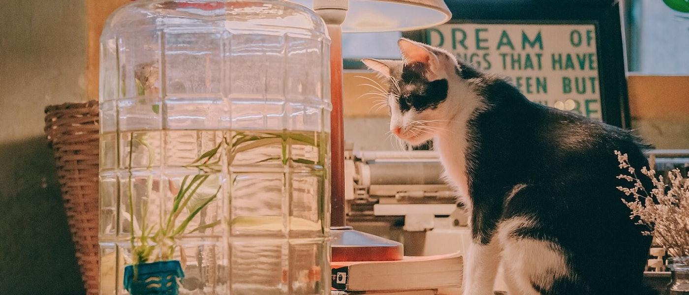 寵物訓練師推薦7款愛用的貓咪用品
