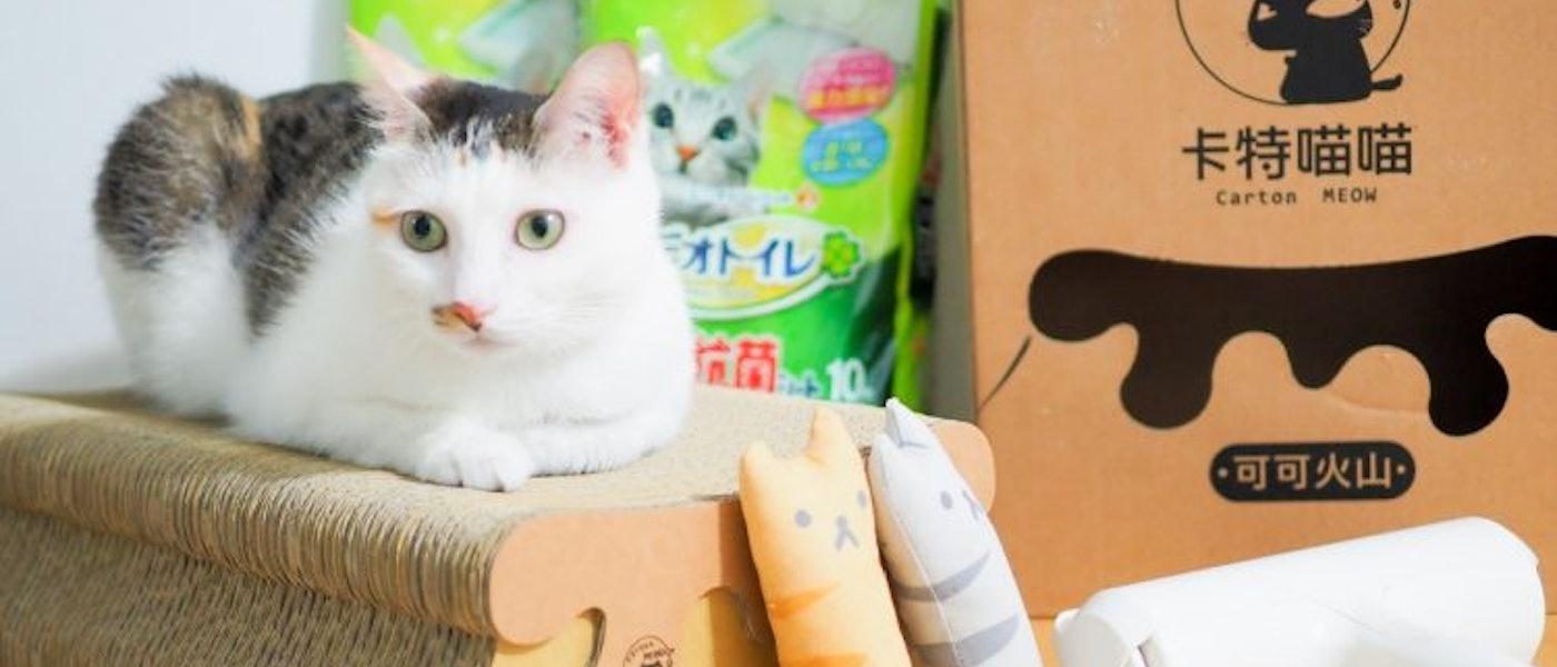 貓咪部落客推薦11款愛用的多貓家庭必備用品