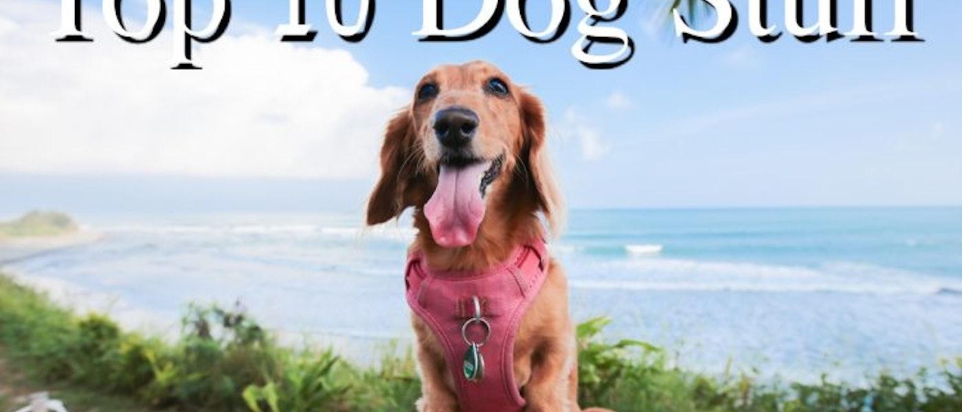 寵物部落客推薦10款愛用的狗狗用品