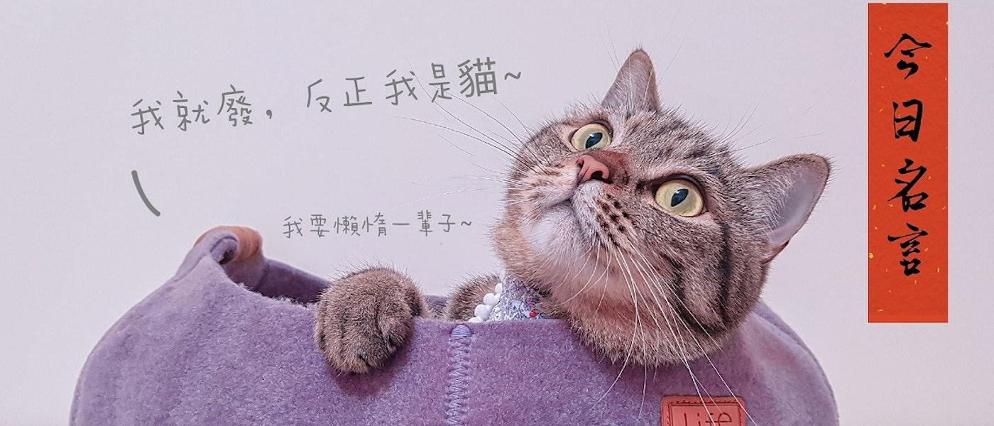 資深貓奴推薦9款貓咪室內用好物