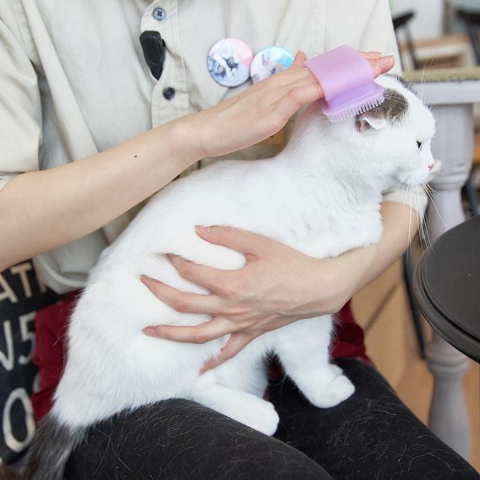 橡膠、矽膠刷:適合用於不擅長梳理毛髮的貓咪