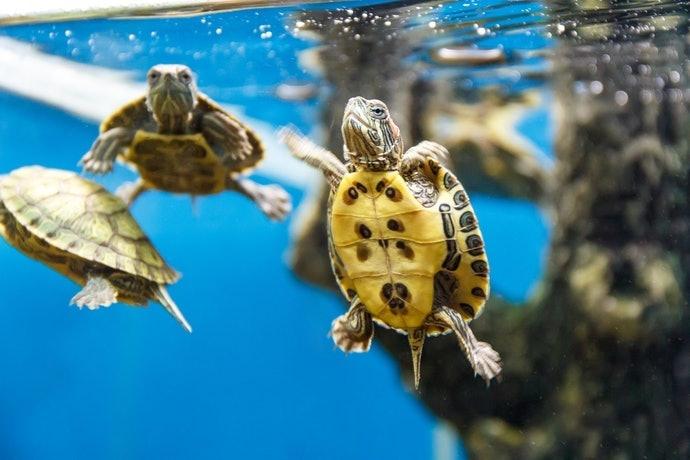 挑選適合烏龜體型的飼料顆粒大小
