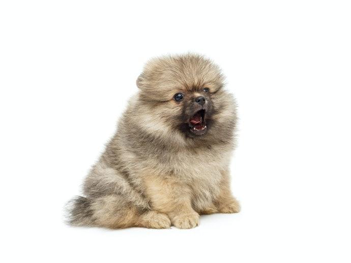 幼犬:注重營養均衡、是否好消化