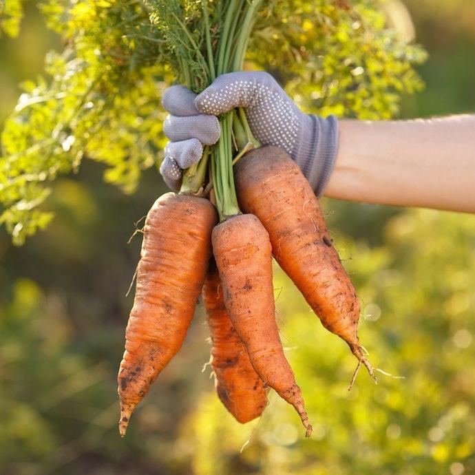 原料種類與栽培方式也影響風味
