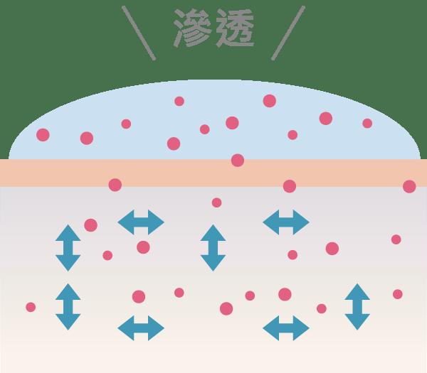 浸透循環:滲透前導精華液