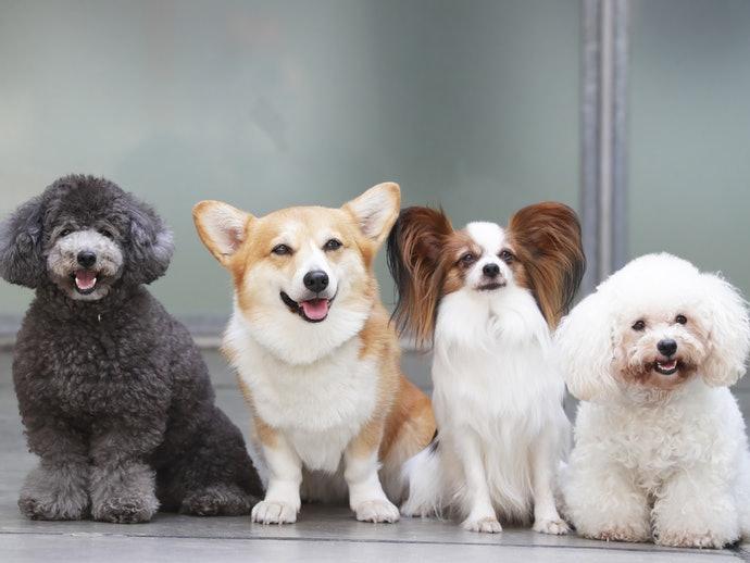 為什麼狗狗也需要吃零食?
