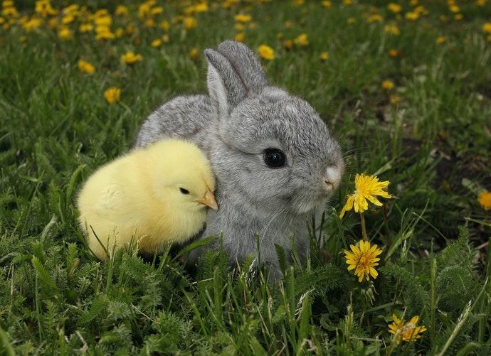 動物文學:感受療癒氛圍