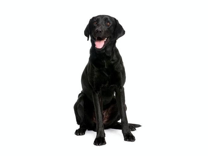 成犬:以維持健康為目的