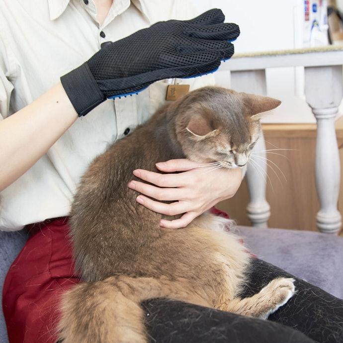 【實測結果】最讓貓咪感到舒服的是「QQPOW 寵物除毛手套」