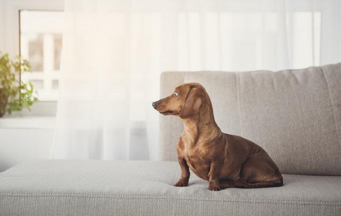 布製沙發:方便清潔保養