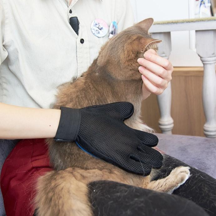 【實測結果】用撫摸方式就能替貓咪刷毛的「QQPOW 寵物除毛手套」最方便使用