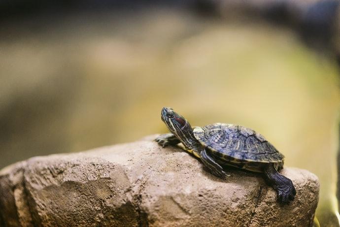 根據烏龜種類選擇