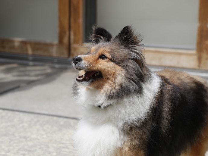 不要在狗狗出現偏差行為或過度興奮時給予零食
