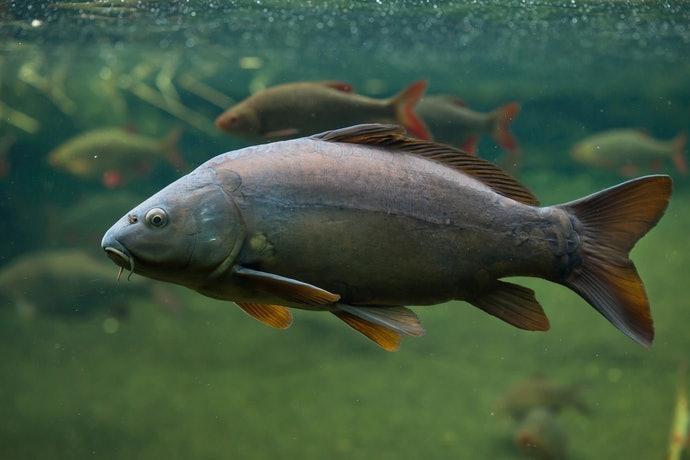 海水魚、淡水魚:依棲息地區分