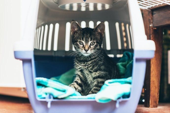 決定尺寸時請別忘記考慮貓咪的成長