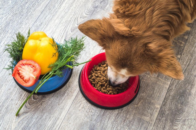 綜合營養飼料:提供每日營養所需