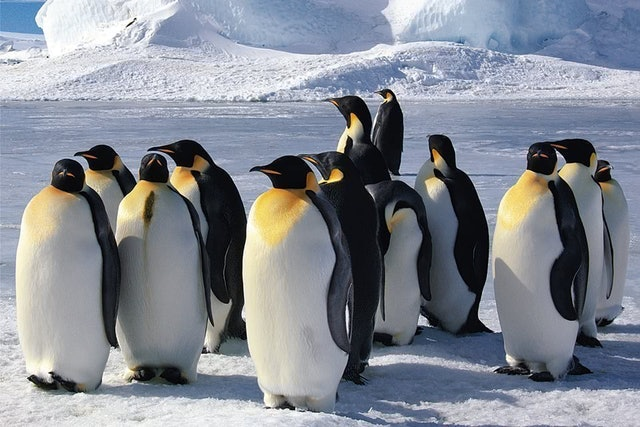 企鵝家族拼圖 1