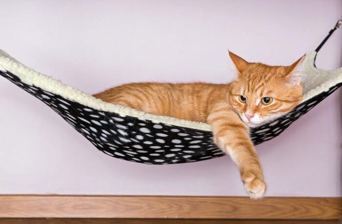 貓用吊床的魅力
