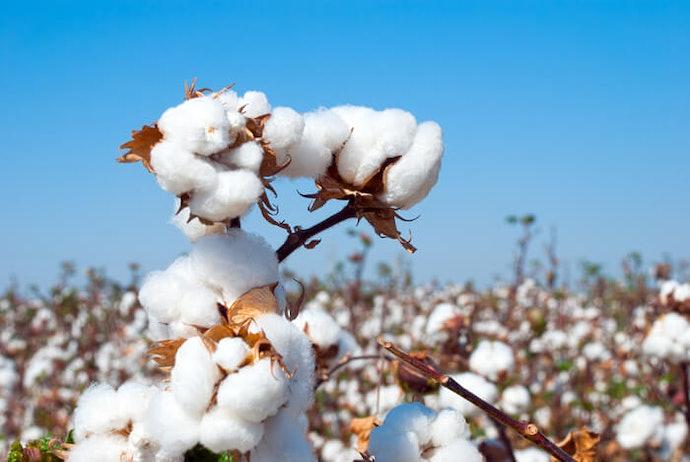 有機棉材質:適合肌膚敏感的小寶貝