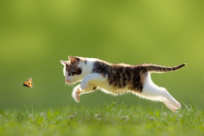 模擬真實獵物的移動來吸引小貓