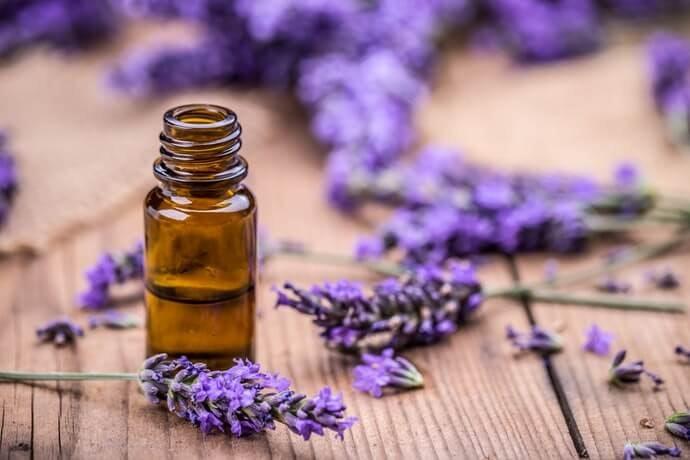 茶樹&薰衣草精油:溫和殺菌效果