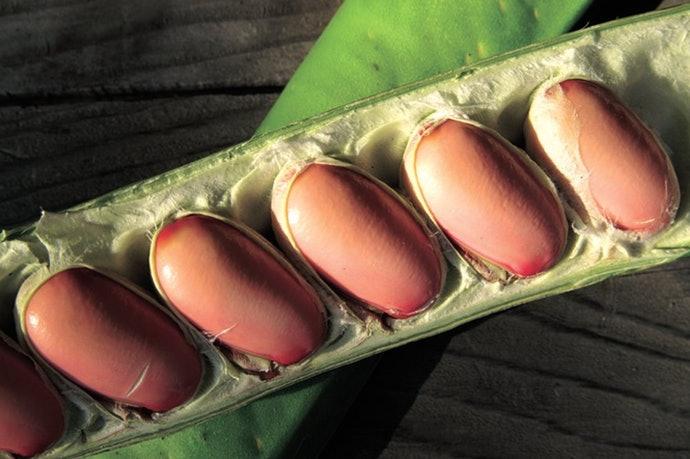 紅刀豆與白刀豆效果相同,「含量比例」的多寡才是重點!