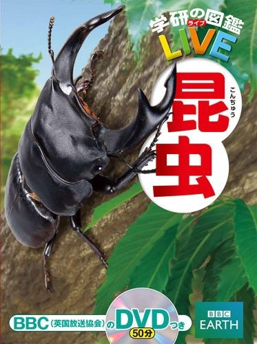 囊括各種昆蟲的百科型圖鑑